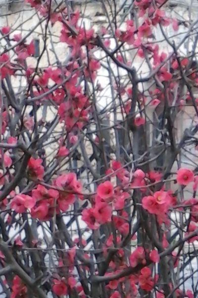Maggio in fiore a Piazza Armerina