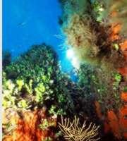 Area naturale marina protetta Capo Gallo - Isola delle Femmine