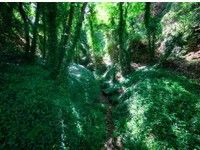 Riserva naturale guidata Grotta delle farfalle