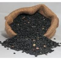 Enogastronomia Sicilia: lenticchia nera di Leonforte